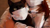 Pertama, Kucing Peliharaan Dilaporkan Positif Corona