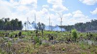 Program Pengentasan Kemiskinan Berefek Signifikan pada Penurunan Laju Deforestasi