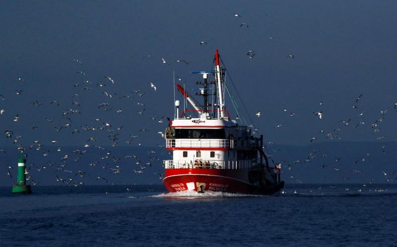 Walau Penangkapan Ikan Turun di Masa Pandemi, Spesies Langka Tetap dalam Bahaya Punah