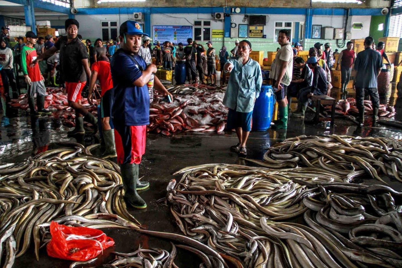 Hasil Tangkapan Ikan Nelayan Indonesia Menumpuk
