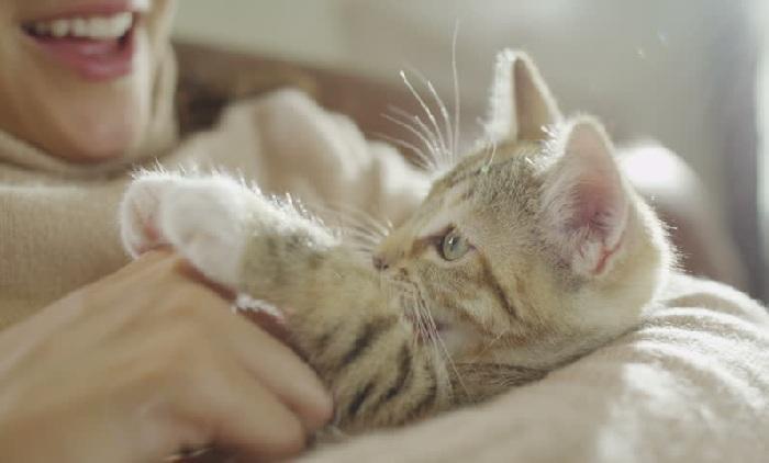 Napak Tilas Jalur Ulat Sutera Tegaskan Kucing adalah Hewan Peliharaan Sejak Jaman Baheula