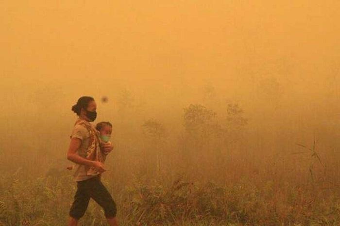Kebakaran hutan rusak ekosistem