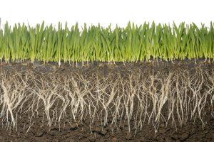 Naiknya Suhu 2 Derajad Celcius Lepas Miliaran Ton Karbon Tanah