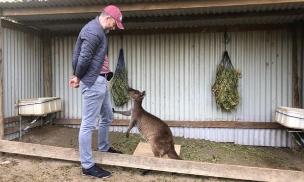 Kanguru Pun Bisa Berkomunikasi Dengan Manusia, Lho...