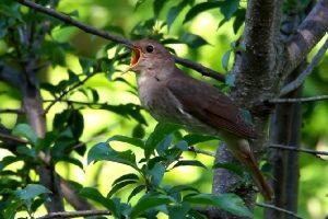 Kicauan Burung Turunkan Tingkat Stress