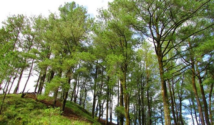 Ka BNPB : Cegah Longsor, Wajib Tanam Pohon di Kemiringan