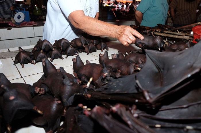 Pasar kelelawar di Tomohon, Sulut