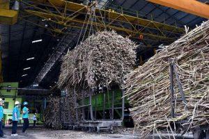 Swasembada Gula Konsumsi, Perlu Aturan Produksi Pabrik Gula Basis Tebu