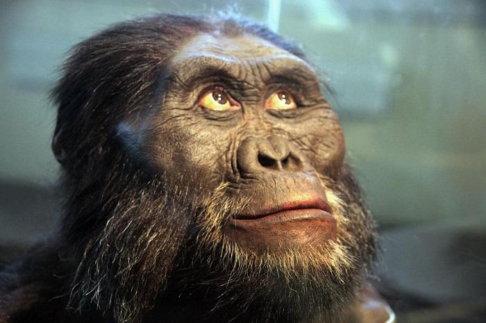 Hidung primata lebih rata