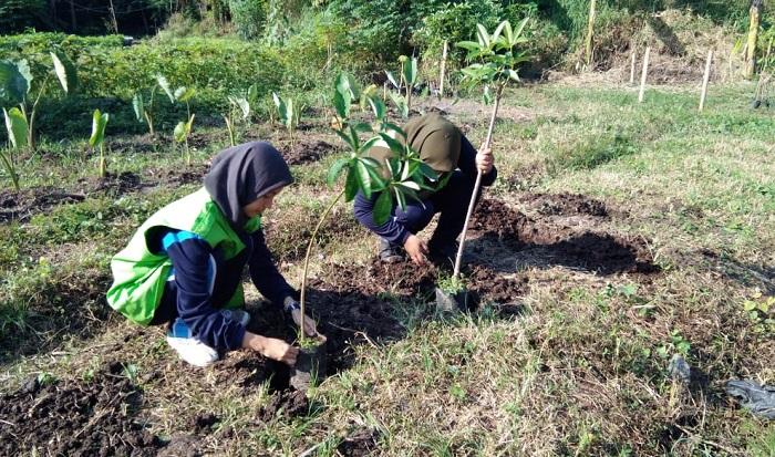 Kegiatan menanam pohon