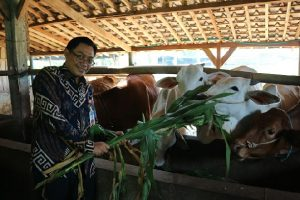 Beri Pelatihan, KPw BI Malang Dorong Pembiakan Sapi Potong di Desa Senggreng, Kabupaten Malang