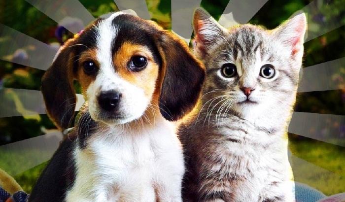 Belum Terbukti, Anjing dan Kucing Tularkan COVID-19
