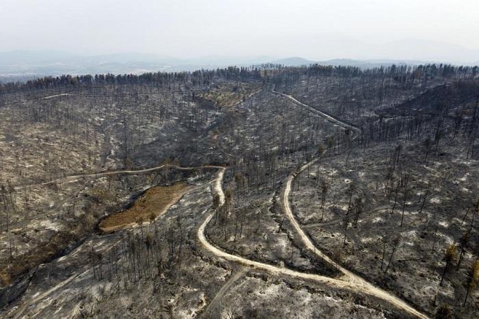 PM Yunani Sebut Kebakaran Hutan di Negaranya Bencana Ekologi Besar