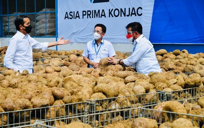 Presiden Sebut Potensi Tanaman Porang Sebagai Makanan Sehat Masa Depan