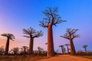 Sepertiga Spesies Pohon Liar di Ambang Kepunahan